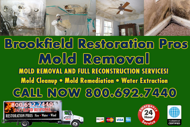 Brookfield mold damage cleanup