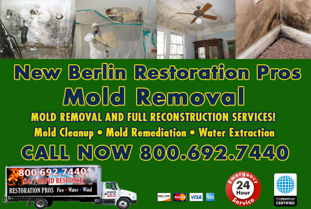 New Berlin mold damage cleanup