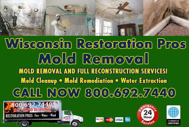 wisconsin mold damage cleanup